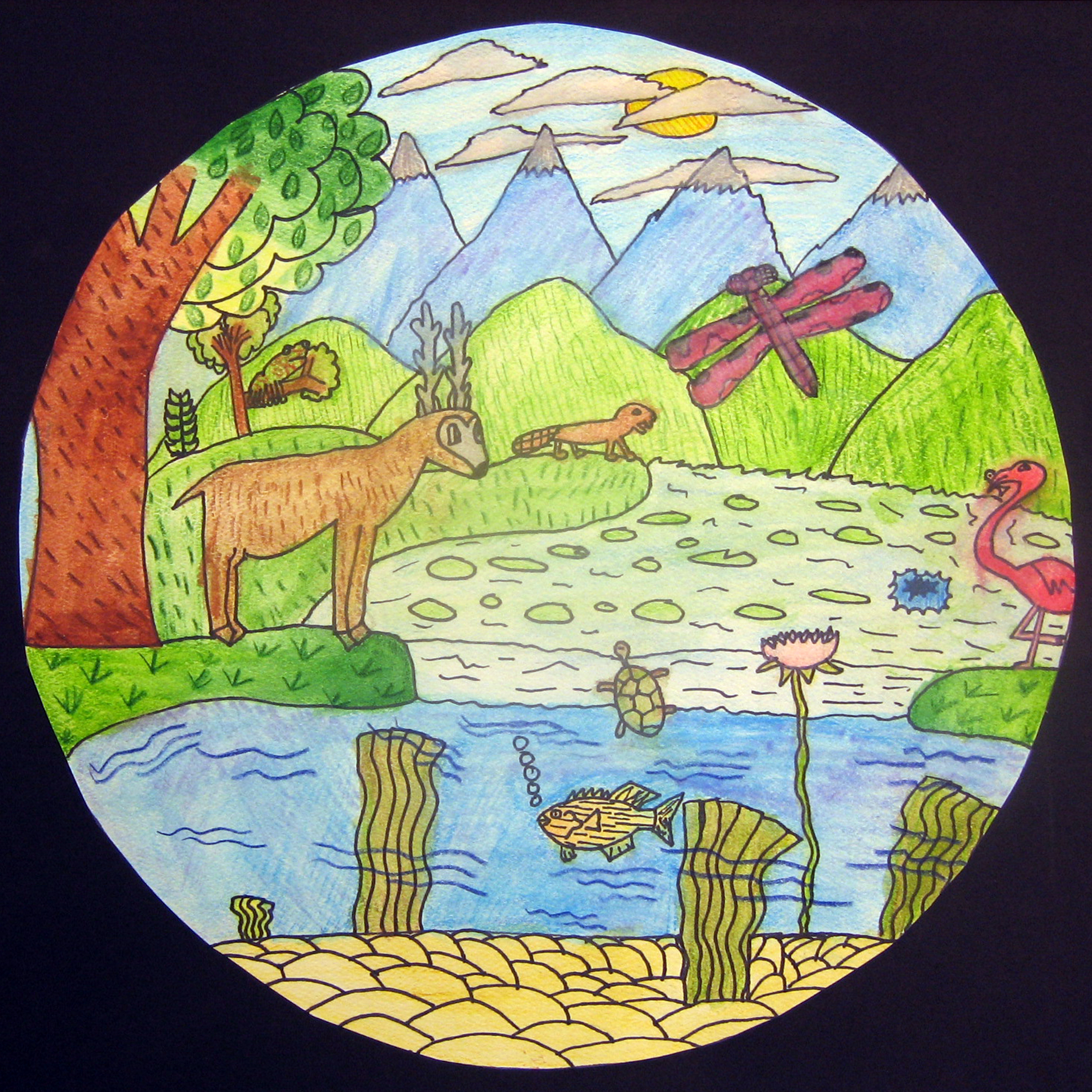 Biome Illustrations Ms Amsler S Artroom