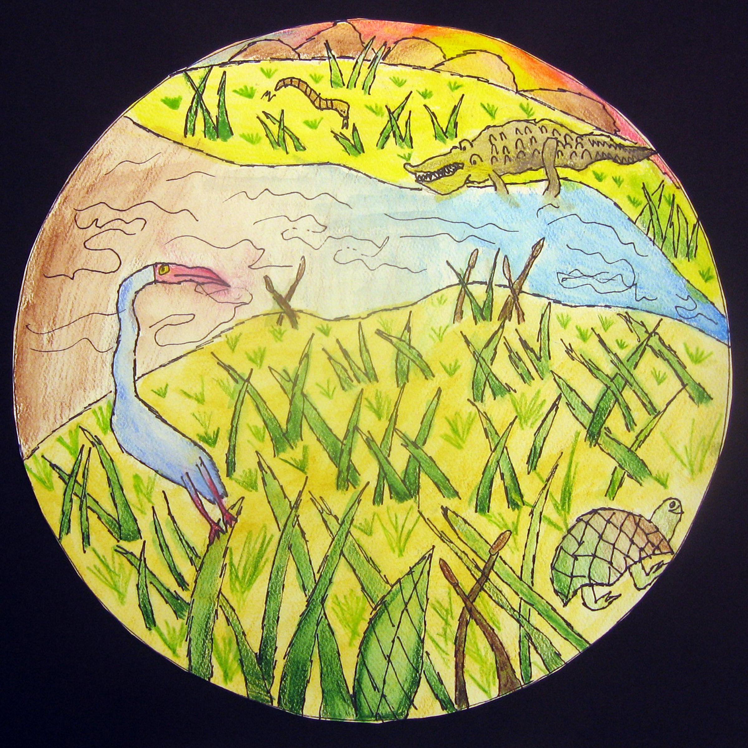 Biome Illustrations Ms Amslers Artroom